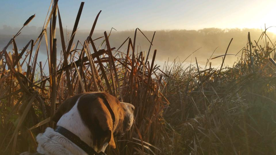Indy in the marsh