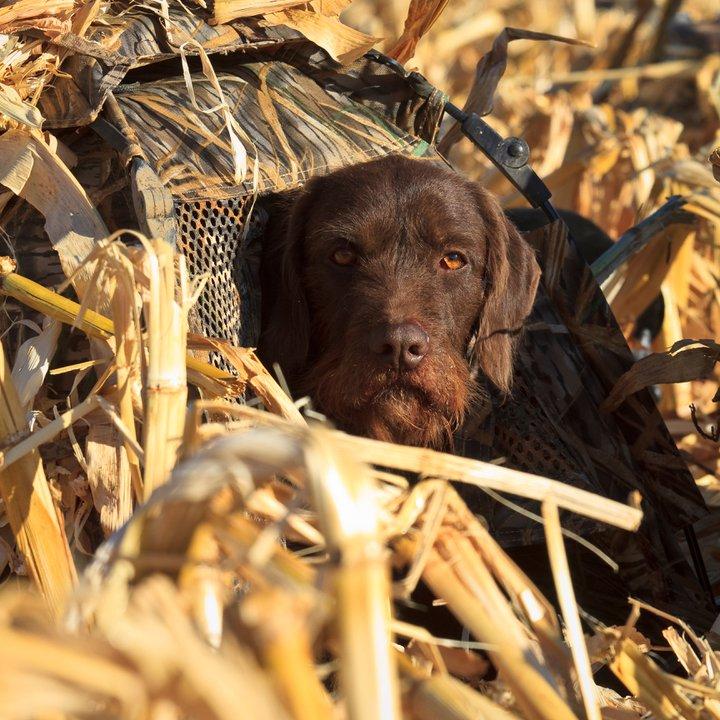 Gunnr Hiding from Geese